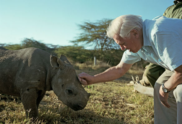 David Attenborough and Blind Baby Rhino