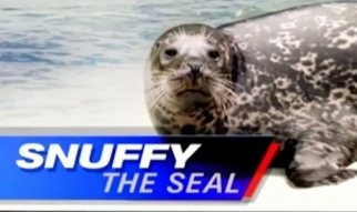 Snuffy The Seal – Shark Week